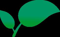препараты растительного происхождени